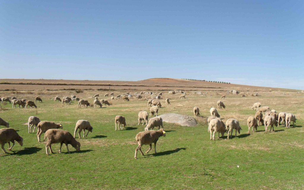 2ª EDICIÓN CERTAMEN FOTOGRÁFICO ANDOLISES Patrimonio Cultural y Natural de la comarca de Los Pedroches